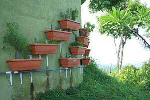 Aquaponics Garden Design garden borderjpg Eve Sibleys Wall Of Salad Costa Rica Style