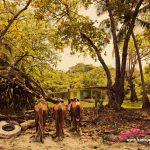Montezuma Horses