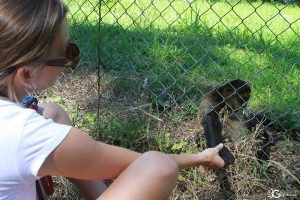 Spider Monkey Reintroduction Program at Curu