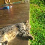 jody-photo-10-catnap