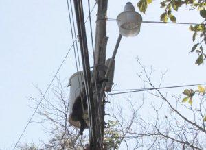 Electrocuted Monkey