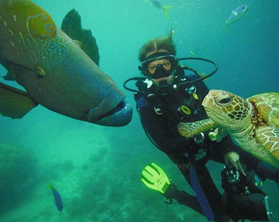 Scuba diving with sea turtle and giant fish